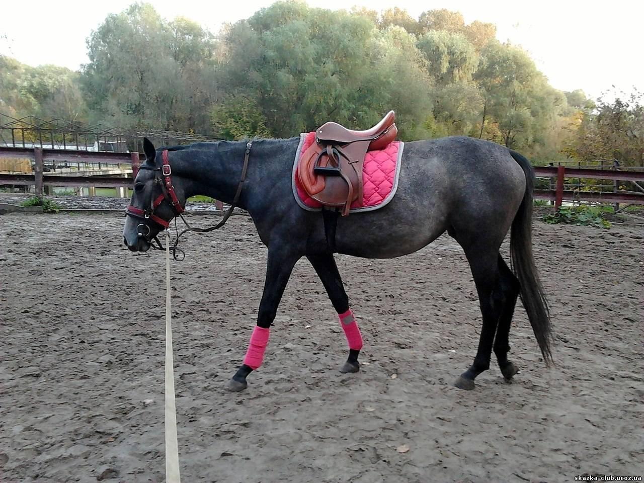 Секс в конюшне с конюхом 7 фотография